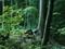 Wydział Leśny